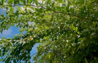 Astrocasia