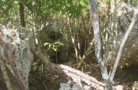 Humus-rich fallen area W.E. Woods March 06